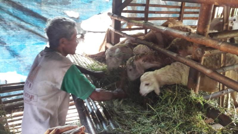 Datam, di usianya yang udah 72 tahun ia terpaksa harus tinggal seatas dengan kambing karena tak punya rumah